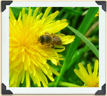 A plant's bright, sweet-smelling flowers attract bees.