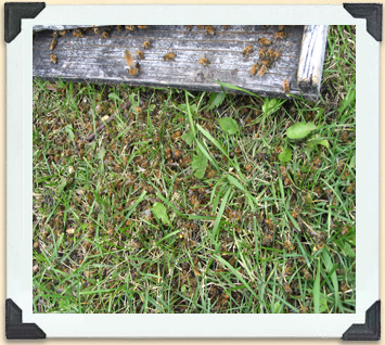 One of the worker bees' tasks is to remove dead hive mates.