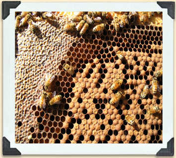 The lower right foreground shows capped brood cells.