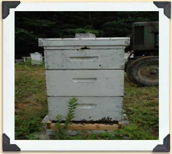 The exterior of a Langstroth hive.