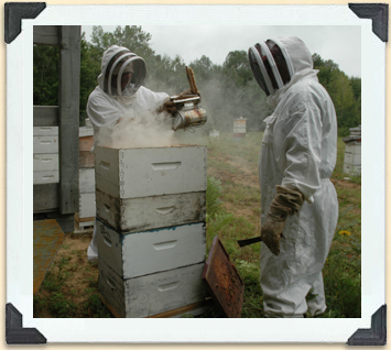 Bee smokers are particularly useful when it comes time to removing the honey frames that bees have worked hard to fill.