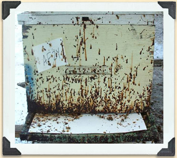 Fecal staining on the exterior of a hive box is an obvious sign of nosema.